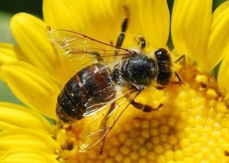 Bijenstal in Tanthof